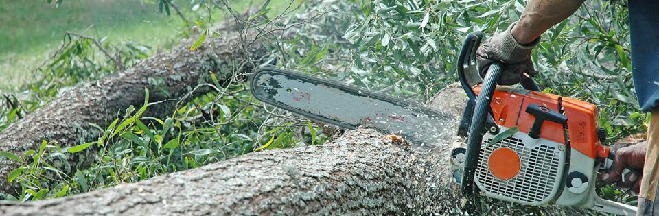 Buckland Tree Care