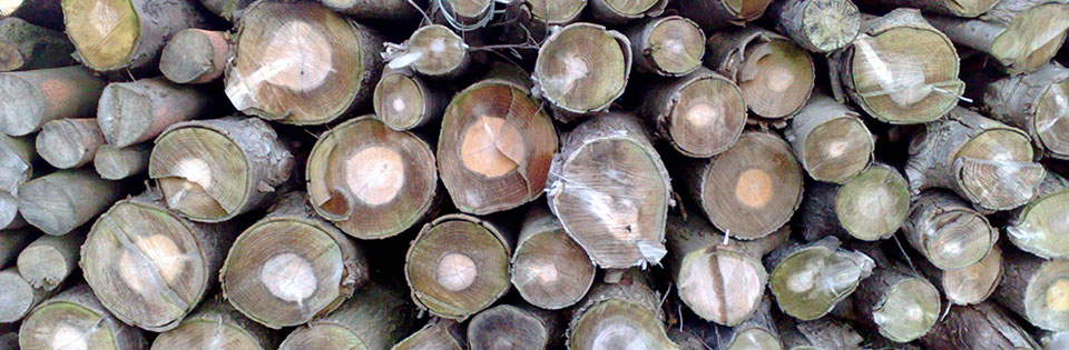 timber management Buckland Tree Care Nantwich